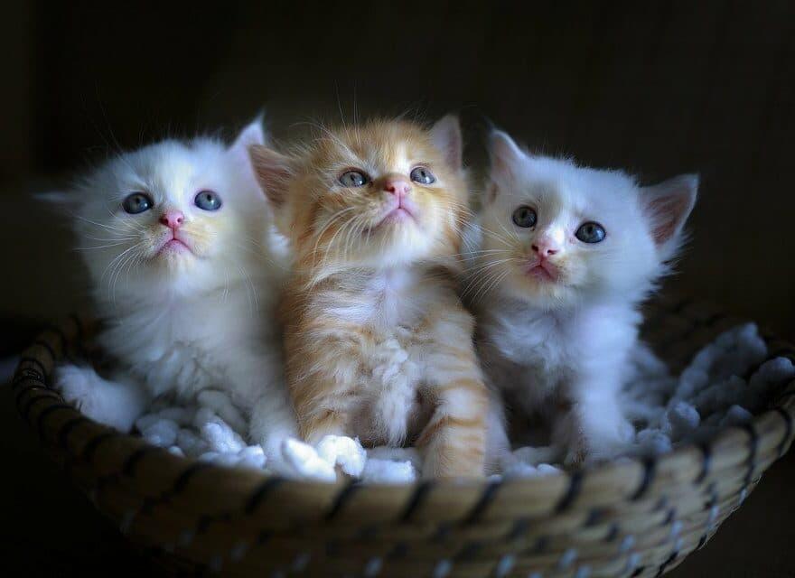 Kleine Katze wird gekitzelt