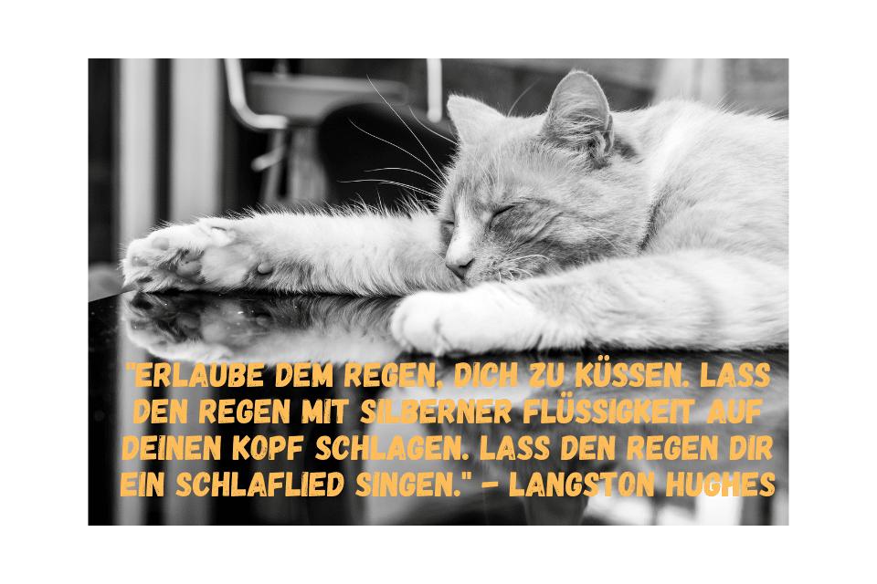 """Schlafende Katze mit dem Zitat:""""Erlaube dem Regen, dich zu küssen. Lass den Regen mit silberner Flüssigkeit auf deinen Kopf schlagen. Lass den Regen dir ein Schlaflied singen."""" - Langston Hughes"""