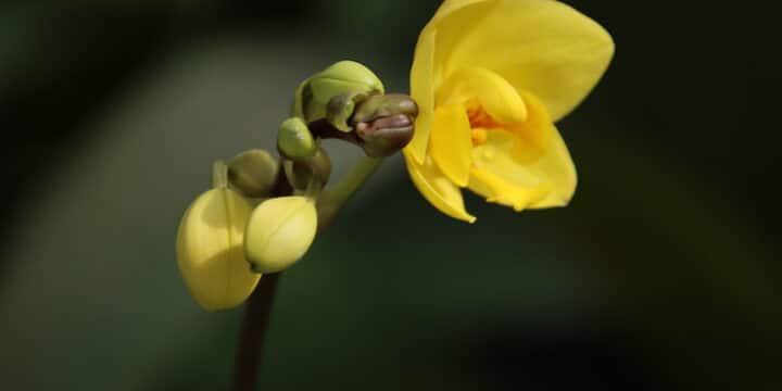 Schöne Lebensweisheiten schönes gelbes Blumenbild