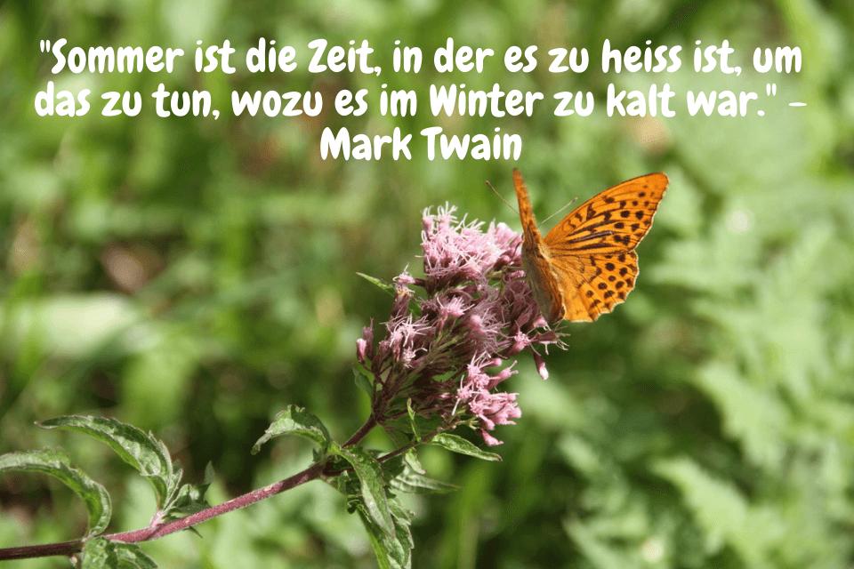 Schmetterlin - Sommer ist die Zeit, in der es zu heiss ist, um das zu tun, wozu es im Winter zu kalt war. - Mark Twain