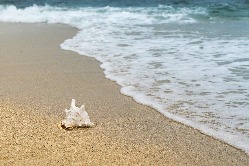 Strand mit Muschel und sand