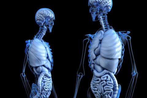Lernen Sie etwas über den Darm