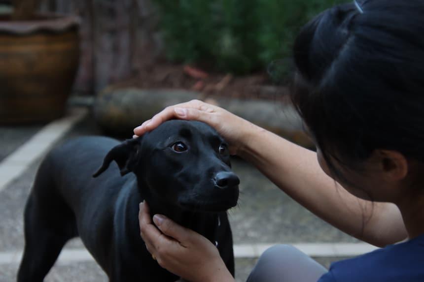 Oon mit einem streuenden Hund