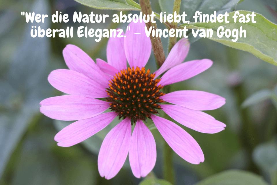Bewundernswerte Gartenzitate - Wer die Natur absolut liebt, findet fast überall Eleganz. - Vincent van Gogh