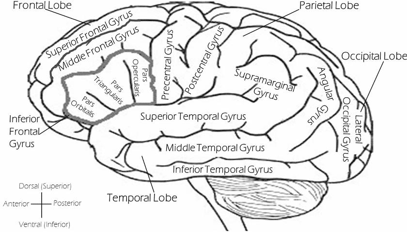 Wie Meditation das Gehirn umbaut