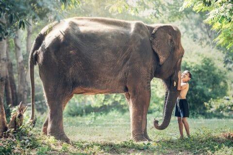 Elefanten Baby aus Chiang Mai