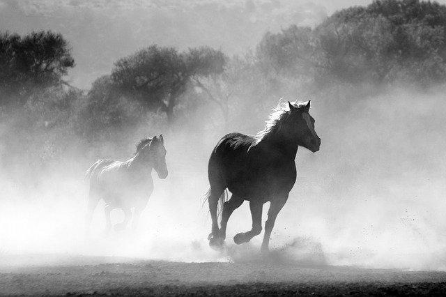 Chinesisches SprichworDas schnellste Pferd kann beim Sprechen kein Wort überholen
